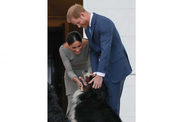 meghan markle prince harry new dog