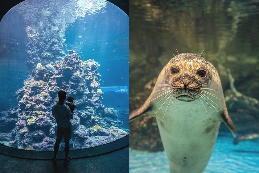 Sleepover in Aquarium Pingtung Taiwan
