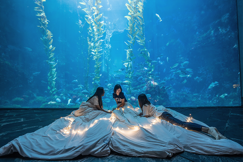 Sleepover in Aquarium Pingtung Taiwan