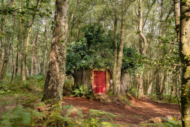 Disney-&-Airbnb-made-a-real-Winnie-the-Pooh-house-to-rent-10